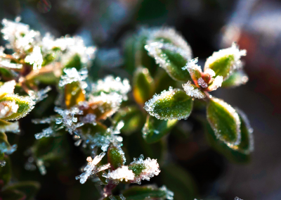 winterfrost-(1)