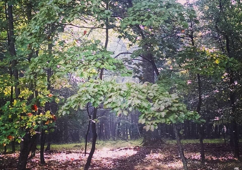 Nature & Soul retreat