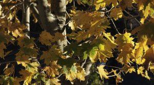 fall (8)