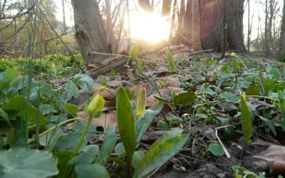 April Foraging and Wild Plant Identification Workshop