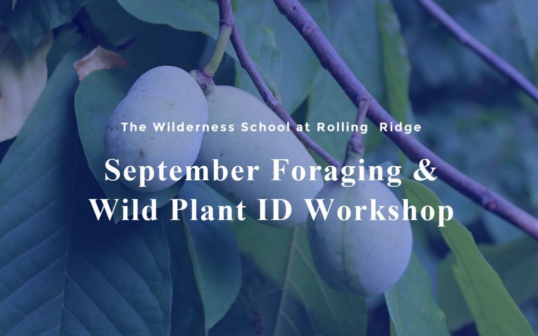 September Foraging & Wild Plant ID Workshop
